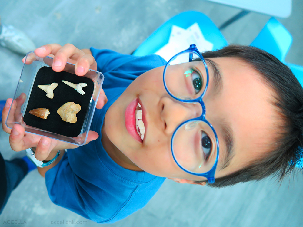 Caleb C.'s fossil shark tooth collection is off to an excellent start!