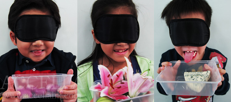 Three of our sniffers, blindfolded, trying to identify the materials in the containers using only their sense of smell.